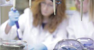 Teste genético -gravidez com risco de doenças raras - Sortimentos.com