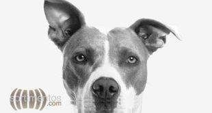 Sortimentos Pet - Animais de Estimação - Cachorros - sortimentos.com